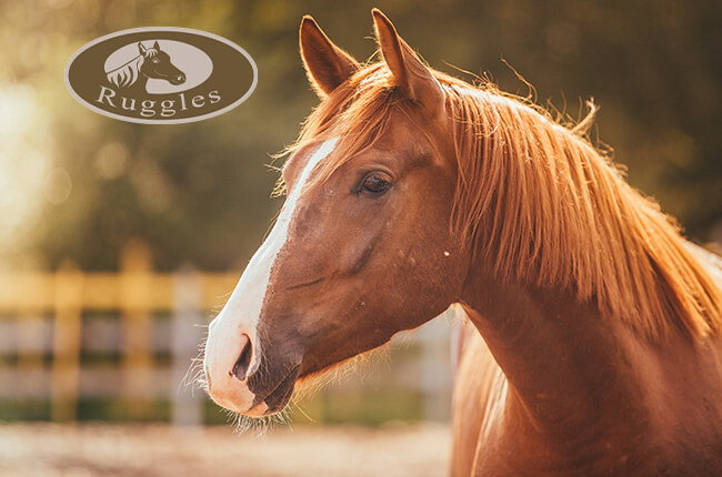 Ruggles Equestrian Email Marketing Banner 3
